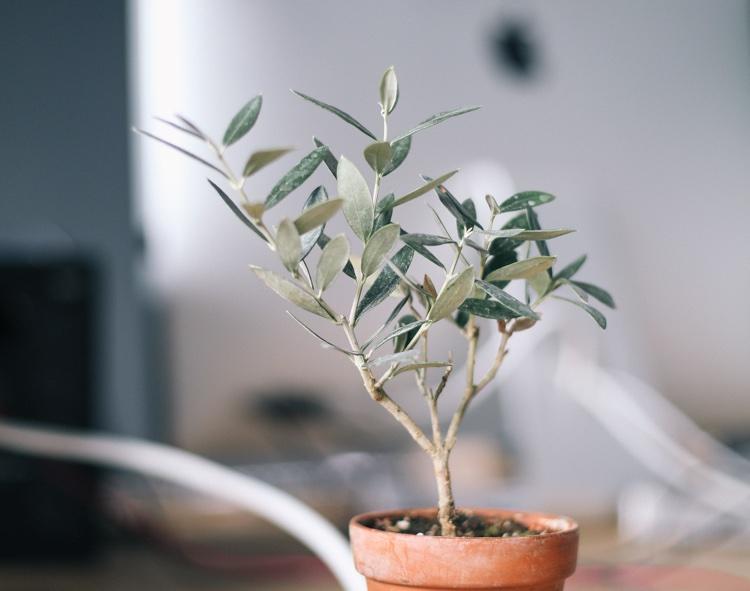 Plant_iMac